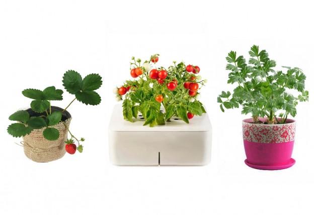 выращиваем зелень на балконе