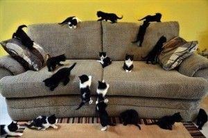 коты и диван