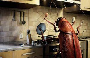как избавится от насекомых