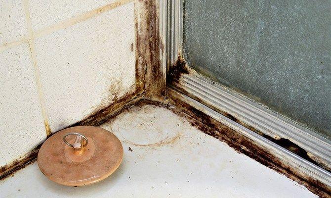 причины возникновения плесени в ванной комнате