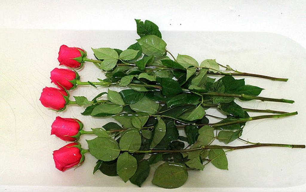 погрузить розы в ванну