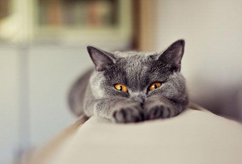 Как убрать запах кошачьей мочи с ковра: обзор самых 3